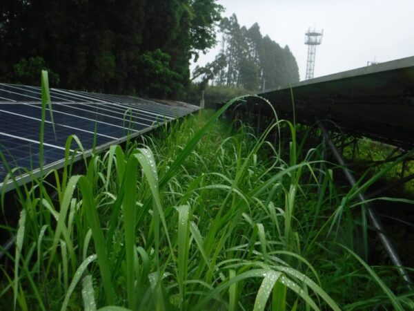 実績・評判口コミ画像02-宮崎県 49.5kW 低圧 メンテナンス