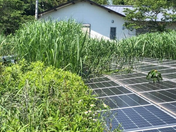 実績・評判口コミ画像01-高知県 49.5kW 低圧 メンテナンス