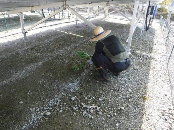 宮崎県 30kW 低圧 メンテナンス