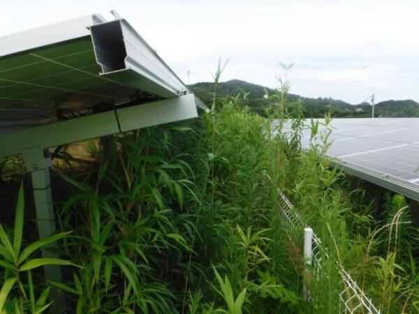 実績・評判口コミ画像01-長崎県 49.5kW 低圧 メンテナンス
